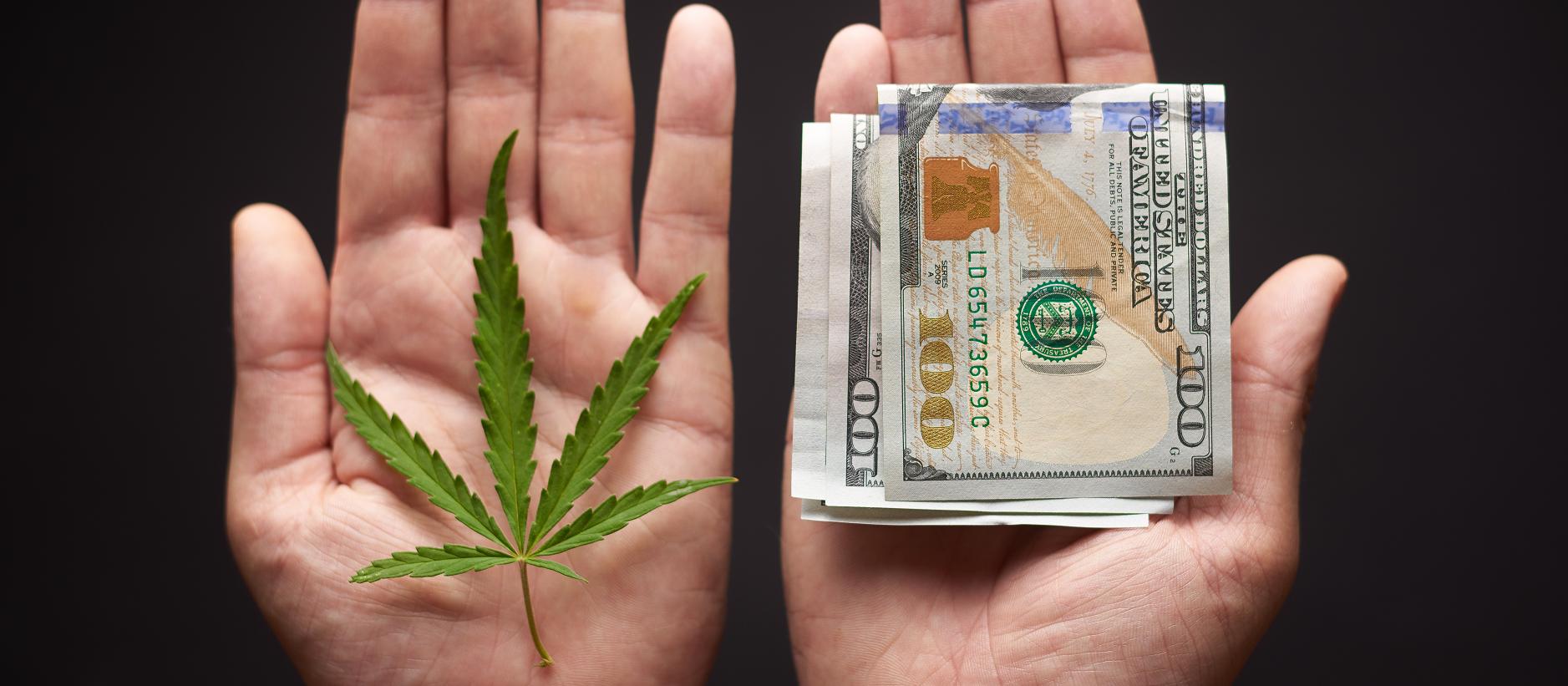 cannabis-insurance-coverage-1877x821